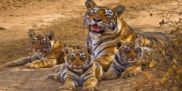 Mundanthurai-Tiger-Reserve
