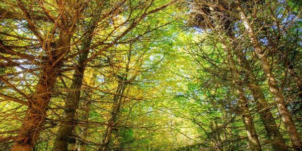 Athiri-forest