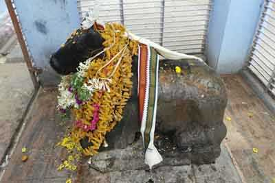 Third Kailasam Thirukalyanam Nandhi